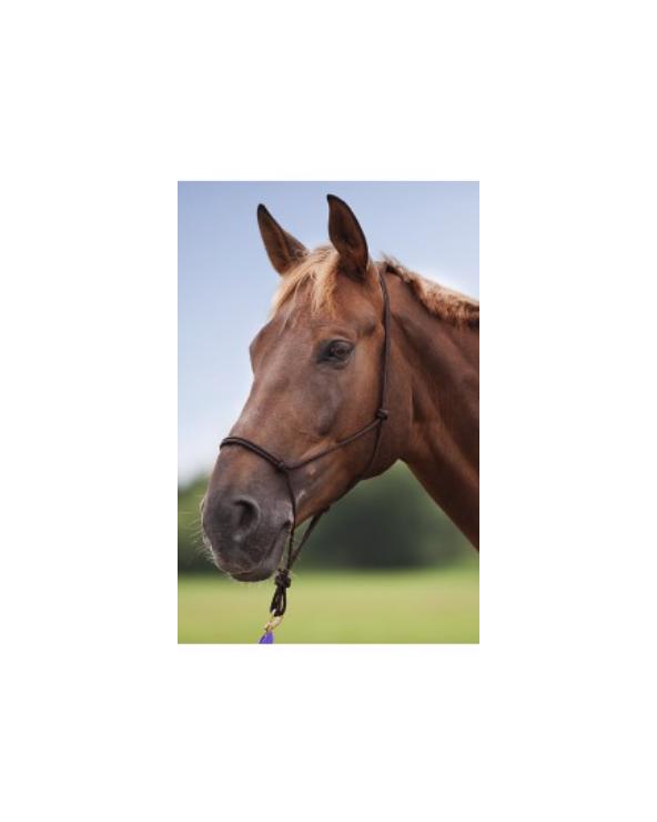 Licol éthologique taille cheval 510156  Accueil